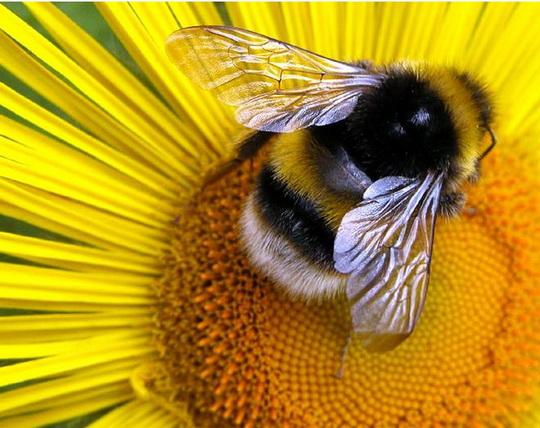 """Результат пошуку зображень за запитом """"бджіл"""""""